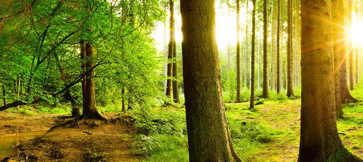Emozionale sugli alberi shop macro