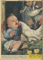 Copertina La Domenica del Corriere. A Luino, una gallina strappa via ad un bambino di due l'unico dentino che gli era spuntato da poco, scambiandolo per un chicco di riso