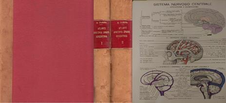 Atlante Anatomia Umana Descrittiva 2 Vol - Angelo Farina - 2