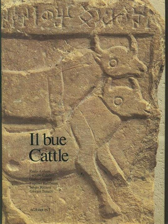 Il bue Cattle - 4