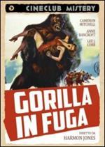 Gorilla in fuga