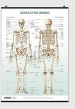 Poster scheletro umano