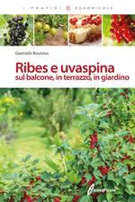 Ribes e uvaspina sul balcone, in terrazzo, in giardino