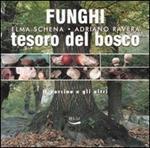 Funghi, tesoro del bosco. Il porcino e gli altri